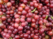 Achtergrond van druiven Stock Fotografie