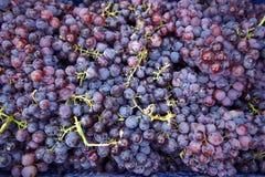 Achtergrond van druiven Stock Foto