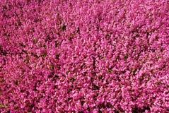 Achtergrond van duizenden bloemen Royalty-vrije Stock Foto