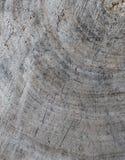 Achtergrond van dwarsdoorsnede van boomboomstam Abstracte textuur van de ringen van oud doorstaan hout met een barst stock fotografie