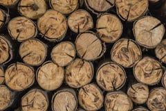 Achtergrond van een besnoeiingsboom Royalty-vrije Stock Foto