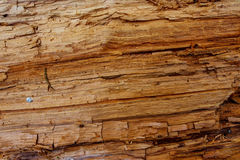 Achtergrond van een boomstamoppervlakte Royalty-vrije Stock Afbeelding