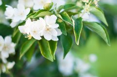 Achtergrond van een groene landschapsabstractie van bloemen op een boom op een warme de zomerdag Stock Afbeelding