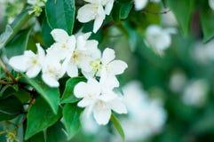 Achtergrond van een groene landschapsabstractie van bloemen op een boom op een warme de zomerdag Stock Afbeeldingen