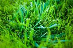 Achtergrond van een groene landschapsabstractie van een gras op een warme de zomerdag Royalty-vrije Stock Foto's