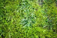 Achtergrond van een groene landschapsabstractie van een gras op een warme de zomerdag Stock Afbeeldingen