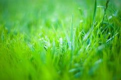 Achtergrond van een groene landschapsabstractie van een gras op een warme de zomerdag Stock Foto