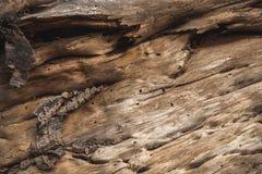 Achtergrond van een houten schors royalty-vrije stock fotografie