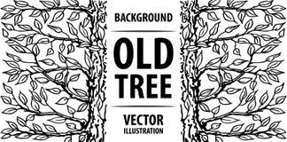 Achtergrond van een oude boom Witte achtergrond en zwarte brieven Vector illustratie Royalty-vrije Stock Foto