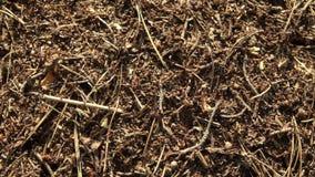 Achtergrond van een rode mierenkolonie stock video