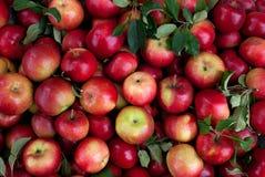 Achtergrond van een verscheidenheid van verse rode appelen stock foto