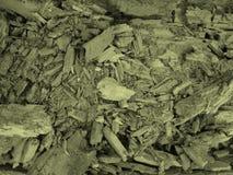 Achtergrond van een verse spleet van een rotte boom royalty-vrije stock foto