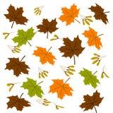 Achtergrond van esdoornbladeren met zaden stock illustratie