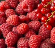 Achtergrond van frambozen en rode aalbessen Verse bessenclose-up Hoogste mening Achtergrond van rode bessen Royalty-vrije Stock Foto's