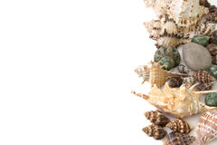 Achtergrond van geïsoleerd shells wordt gemaakt die Royalty-vrije Stock Foto's