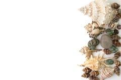 Achtergrond van geïsoleerd shells wordt gemaakt die Royalty-vrije Stock Afbeelding