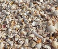 Achtergrond van gebroken shells strandthema stock foto