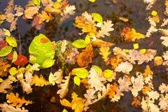 Achtergrond van gele bladeren Stock Foto's