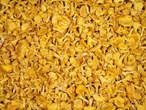 Achtergrond van gele cantharellen Verse paddestoelen van het voorste gedeelte Royalty-vrije Stock Afbeeldingen