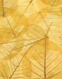 Achtergrond van gele gevallen de herfstbladeren Stock Foto's