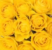 Achtergrond van gele rozen Stock Foto