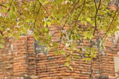 Achtergrond van geruïneerde oude tempel Royalty-vrije Stock Afbeeldingen