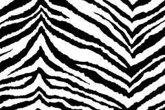 Achtergrond van gestreepte zwart-wit, strepen van zebra Stock Foto