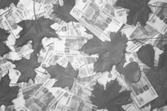 Achtergrond van gevallen bladeren en vijf duizendste rekeningenbankbiljetten Miljoen Russische roebels Concept dalende muntcursus stock afbeelding