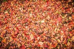 Achtergrond van gevallen de herfstbladeren dat wordt gemaakt Stock Foto's