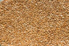 Achtergrond van glanzend bruin droog ruw lijnzaad stock foto