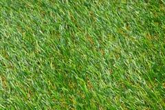 Achtergrond van gras Royalty-vrije Stock Foto's