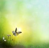 Achtergrond van gras. Vlinder op een Bloem royalty-vrije stock afbeelding