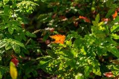 Achtergrond van groen aan de herfst kleurrijke bladeren stock afbeelding