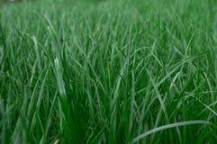 Achtergrond van groen gazonclose-up royalty-vrije stock afbeelding