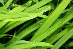 Achtergrond van groen gras Royalty-vrije Stock Foto's