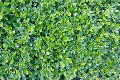 Achtergrond van groen gras Royalty-vrije Stock Foto