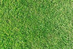 Achtergrond van groen gras Royalty-vrije Stock Fotografie