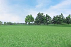 Achtergrond van groen gras met de boom Royalty-vrije Stock Afbeeldingen