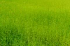 Achtergrond van groen gras, textuur Royalty-vrije Stock Fotografie
