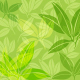 Achtergrond van groene bladeren Royalty-vrije Stock Afbeeldingen