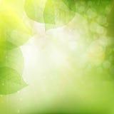 Achtergrond van groene bladeren Eps 10 Royalty-vrije Stock Afbeeldingen