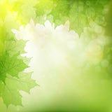 Achtergrond van groene bladeren Eps 10 Stock Foto
