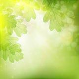 Achtergrond van groene bladeren Eps 10 Royalty-vrije Stock Fotografie