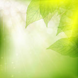 Achtergrond van groene bladeren Eps 10 Stock Afbeeldingen