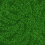 Achtergrond van groene stekelige takken van een Kerstboom Stock Foto