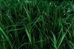 Achtergrond van heldergroen gras Royalty-vrije Stock Fotografie