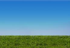Achtergrond van hemel en gras Stock Afbeeldingen