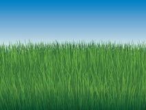 Achtergrond van hemel en grenzeloos groen gras vector illustratie