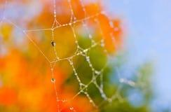 Achtergrond van het de dalings de oranje spinneweb van de herfst Stock Foto's
