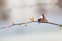 Achtergrond van het de verbindings de mooie stilleven van de de herfstlente bokeh Boomtak met droge bruine blad jonge rode groene Stock Foto's